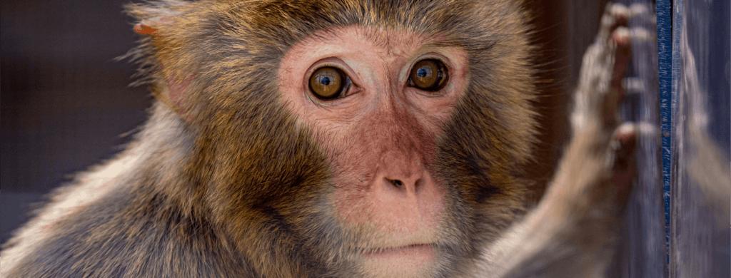 La Tanière: plus qu'un zoo, un refuge